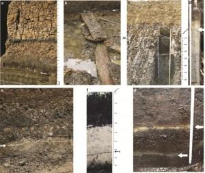 AV-tephra in different sedimentary settings: a: Migliara 44.5, b: Campo Inferiore, c: Ricci, d: Borgo Hermada, e: Tratturo Caniò, f: Mezzaluna, g: double tephra layer at Femmina Morta. Arrows indicate location of Tephra layer (Figures a-c,e,f from Sevink et al., 2011, 2013).